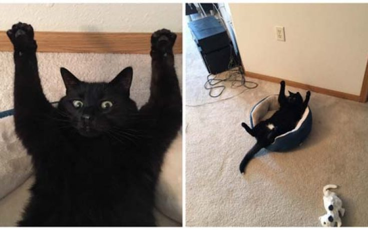 Γάτες που... κάνουν τα δικά τους! #32 (6)