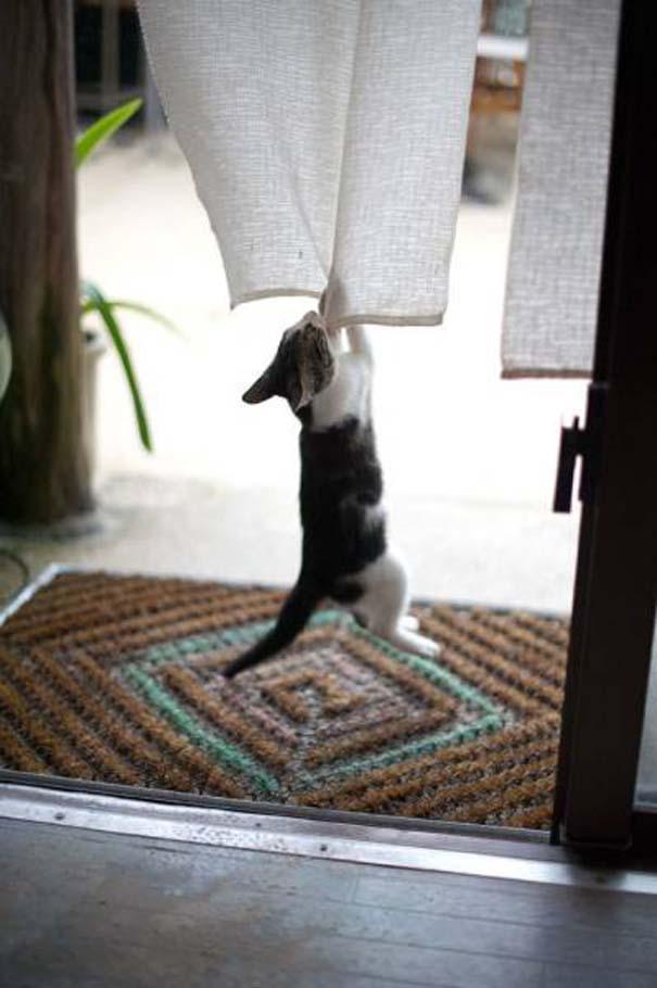Γάτες που... κάνουν τα δικά τους! #31 (2)
