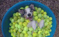 Αυτός είναι ξεκάθαρα ο πιο ευτυχισμένος σκύλος στον κόσμο