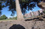 Σκίουρος κλέβει GoPro - καταγράφει την διαφυγή του