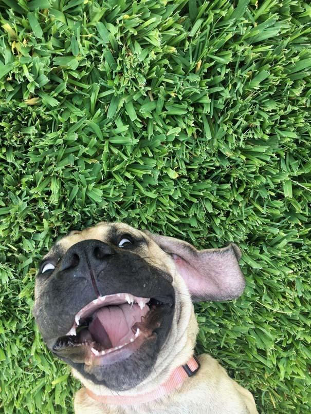 Σκύλοι σε ξεκαρδιστικές γκριμάτσες (2)