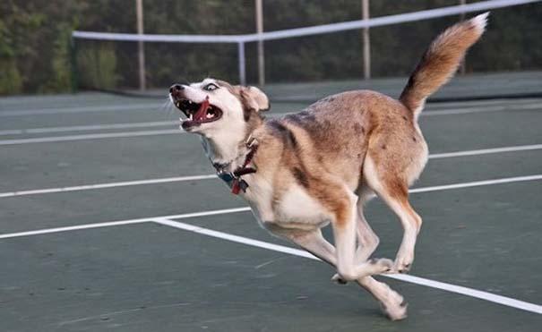 Σκύλοι σε ξεκαρδιστικές γκριμάτσες (5)