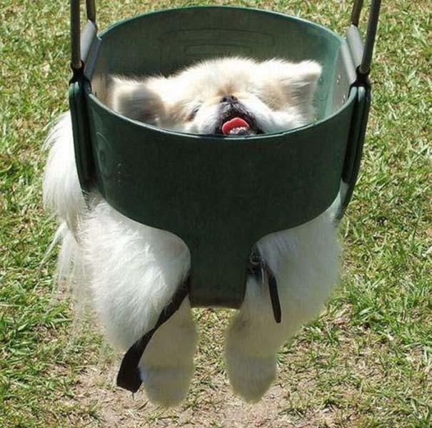Σκύλοι σε ξεκαρδιστικές γκριμάτσες (7)
