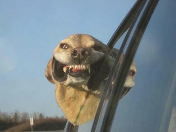Σκύλοι σε ξεκαρδιστικές γκριμάτσες (9)