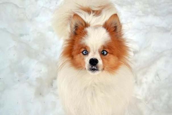 Σκύλοι σε ξεκαρδιστικές γκριμάτσες (10)