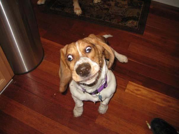 Σκύλοι σε ξεκαρδιστικές γκριμάτσες (11)
