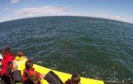 Τουριστικό σκάφος έρχεται σε στενή επαφή με γιγάντια φάλαινα