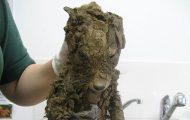 Άγνωστο ζώο βρέθηκε στις λάσπες και δεν μπορούσαν να αναγνωρίσουν τι είναι μέχρι να το καθαρίσουν (1)