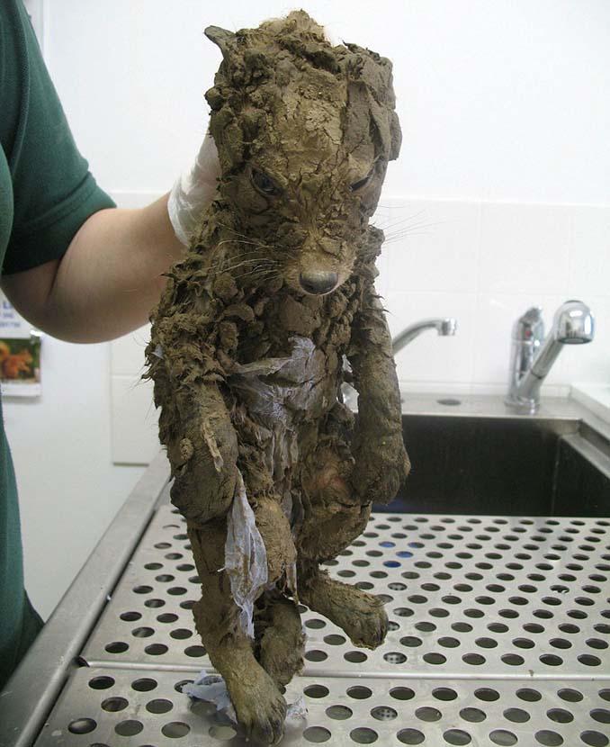 Άγνωστο ζώο βρέθηκε στις λάσπες και δεν μπορούσαν να αναγνωρίσουν τι είναι μέχρι να το καθαρίσουν (2)