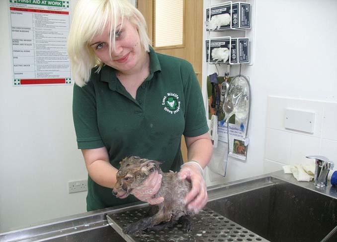 Άγνωστο ζώο βρέθηκε στις λάσπες και δεν μπορούσαν να αναγνωρίσουν τι είναι μέχρι να το καθαρίσουν (3)
