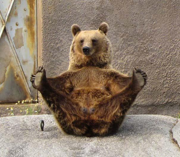 25 απίθανα ζώα που κάνουν γιόγκα (9)