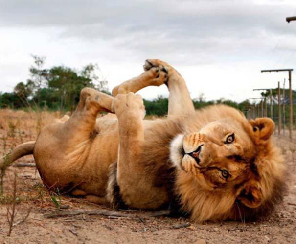 25 απίθανα ζώα που κάνουν γιόγκα (18)