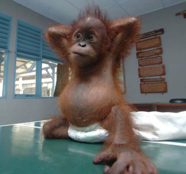 25 απίθανα ζώα που κάνουν γιόγκα (20)