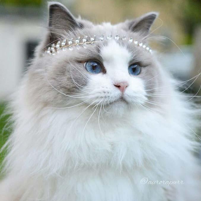 Aurora: Η γάτα πριγκίπισσα (1)