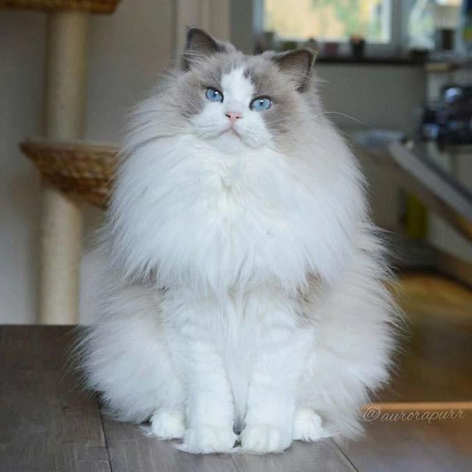 Aurora: Η γάτα πριγκίπισσα (2)