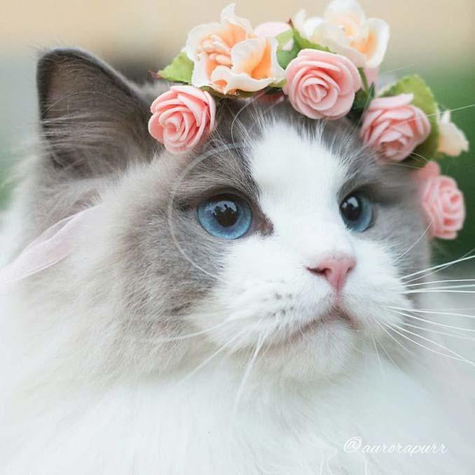 Aurora: Η γάτα πριγκίπισσα (3)