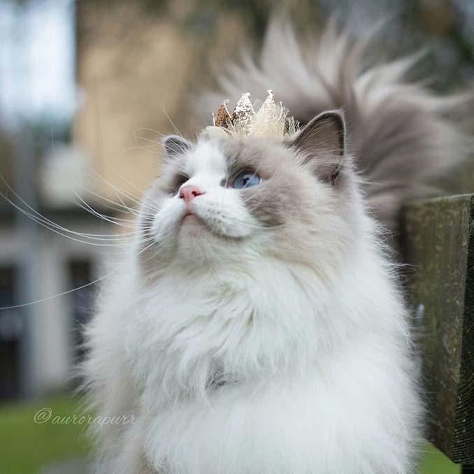 Aurora: Η γάτα πριγκίπισσα (4)