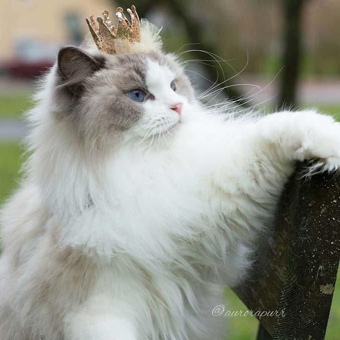 Aurora: Η γάτα πριγκίπισσα (5)