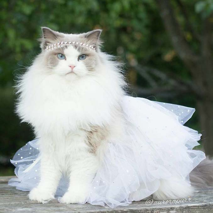 Aurora: Η γάτα πριγκίπισσα (6)