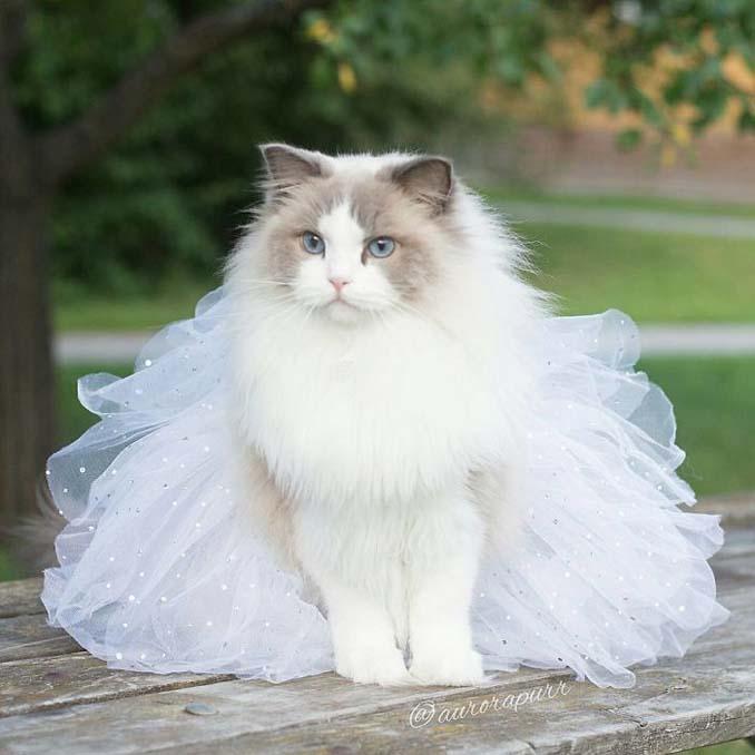 Aurora: Η γάτα πριγκίπισσα (7)
