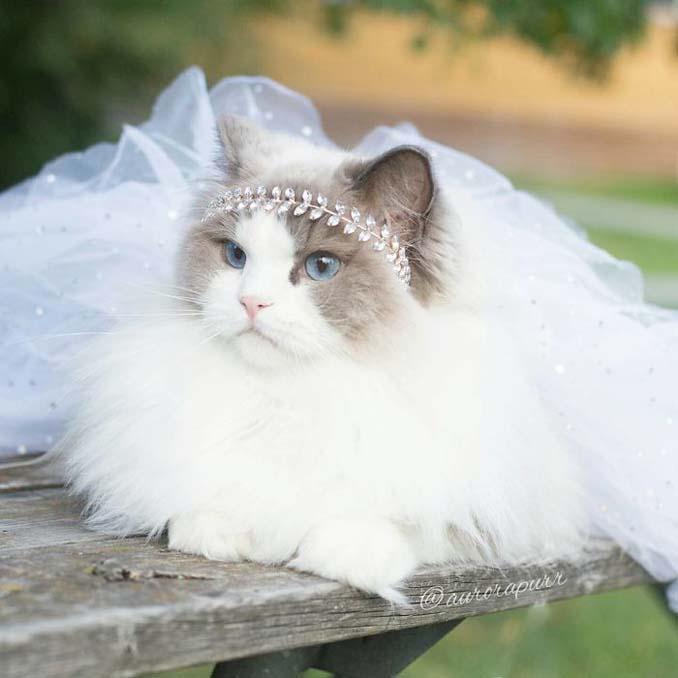 Aurora: Η γάτα πριγκίπισσα (8)