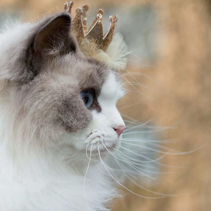 Aurora: Η γάτα πριγκίπισσα (10)