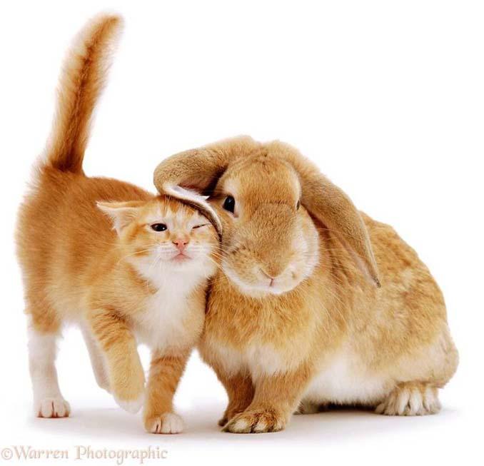 Διαφορετικά ζώα μοιράζονται τα ίδια χρώματα (1)