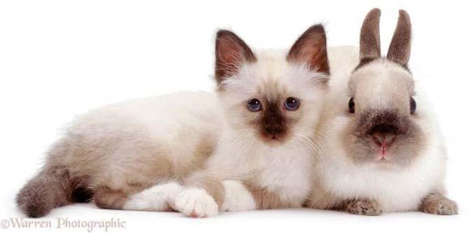 Διαφορετικά ζώα μοιράζονται τα ίδια χρώματα (2)