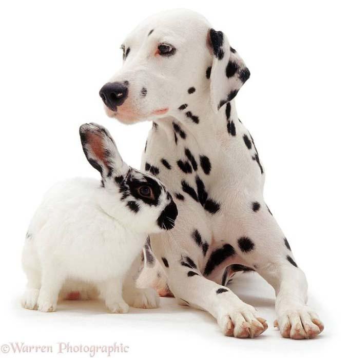 Διαφορετικά ζώα μοιράζονται τα ίδια χρώματα (3)