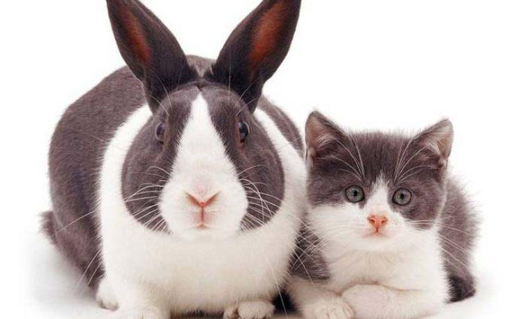 Διαφορετικά ζώα μοιράζονται τα ίδια χρώματα (4)