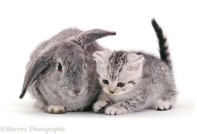 Διαφορετικά ζώα μοιράζονται τα ίδια χρώματα (5)