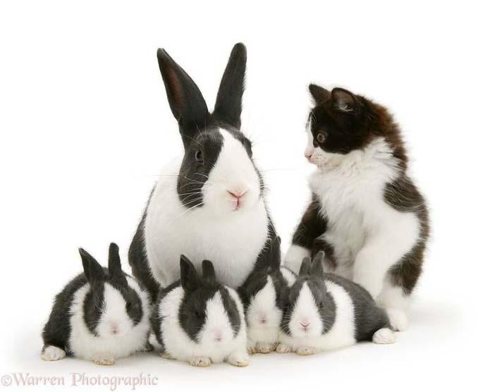 Διαφορετικά ζώα μοιράζονται τα ίδια χρώματα (7)