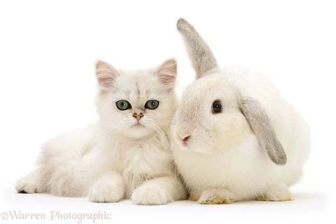 Διαφορετικά ζώα μοιράζονται τα ίδια χρώματα (8)