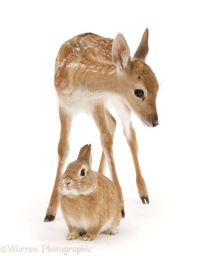 Διαφορετικά ζώα μοιράζονται τα ίδια χρώματα (11)