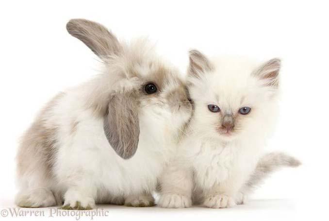 Διαφορετικά ζώα μοιράζονται τα ίδια χρώματα (12)