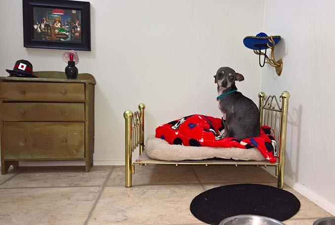 Έφτιαξε δωμάτιο για τον σκύλο της κάτω από την σκάλα (3)