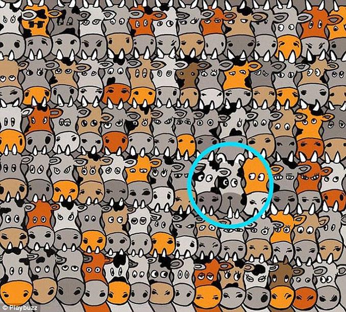 Μπορείτε να εντοπίσετε το σκύλο ανάμεσα στις αγελάδες; (3)