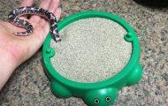 Φίδι παίζει με το νέο του αμμοδοχείο