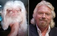 Φωτογραφίες σκύλων που θυμίζουν διάσημα πρόσωπα (1)