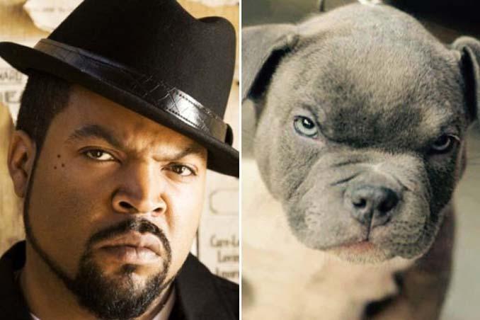 Φωτογραφίες σκύλων που θυμίζουν διάσημα πρόσωπα (2)