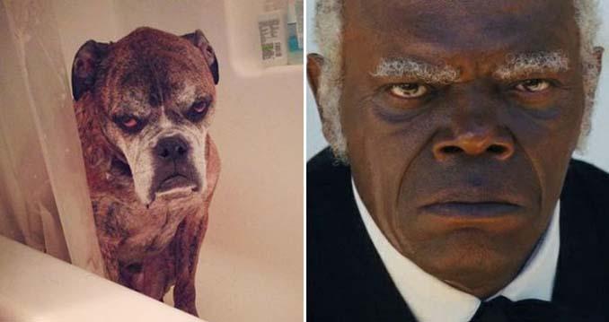 Φωτογραφίες σκύλων που θυμίζουν διάσημα πρόσωπα (4)