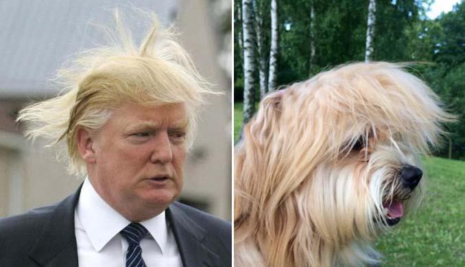 Φωτογραφίες σκύλων που θυμίζουν διάσημα πρόσωπα (5)