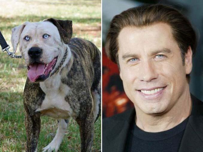Φωτογραφίες σκύλων που θυμίζουν διάσημα πρόσωπα (6)