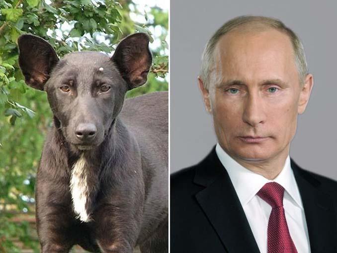 Φωτογραφίες σκύλων που θυμίζουν διάσημα πρόσωπα (7)