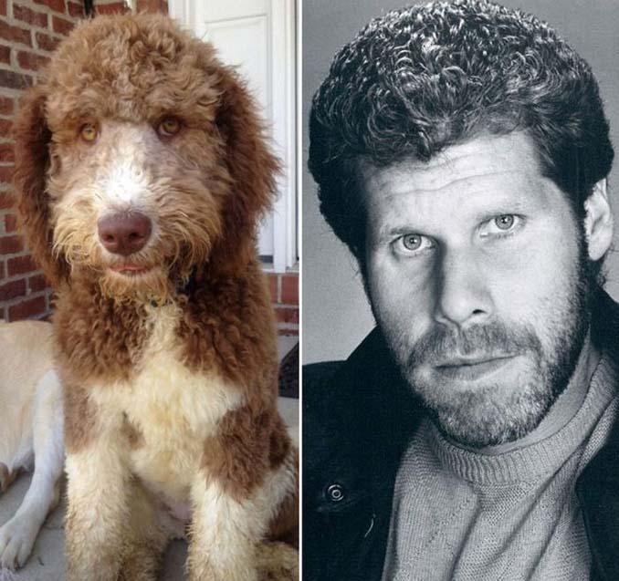 Φωτογραφίες σκύλων που θυμίζουν διάσημα πρόσωπα (8)