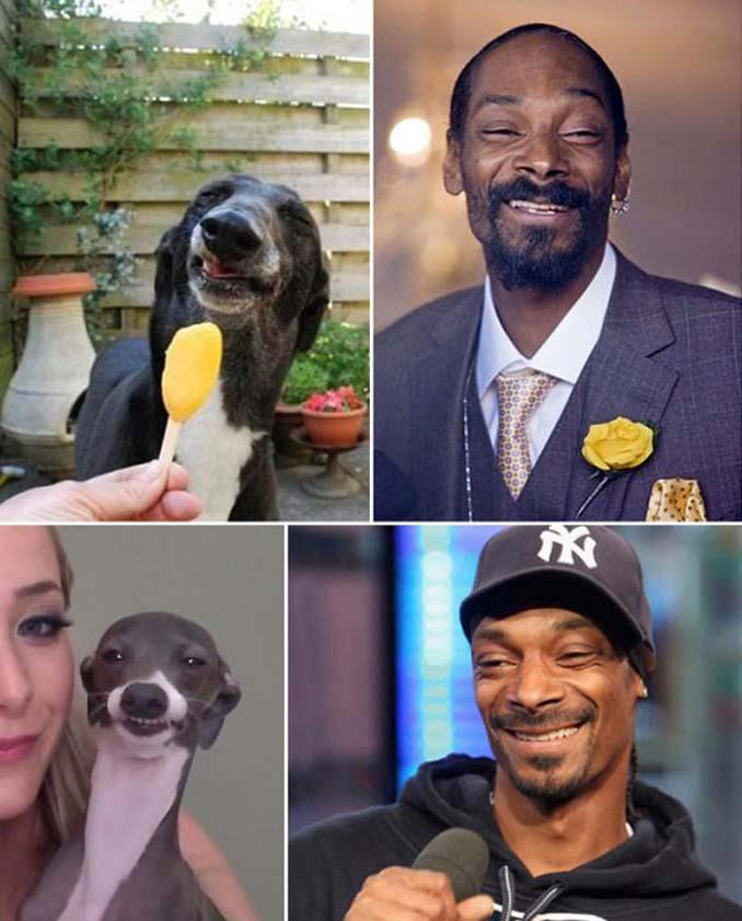 Φωτογραφίες σκύλων που θυμίζουν διάσημα πρόσωπα (9)