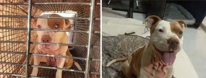 16 φωτογραφίες ζώων πριν και μετά την διάσωση που θα σας φτιάξουν την μέρα (3)
