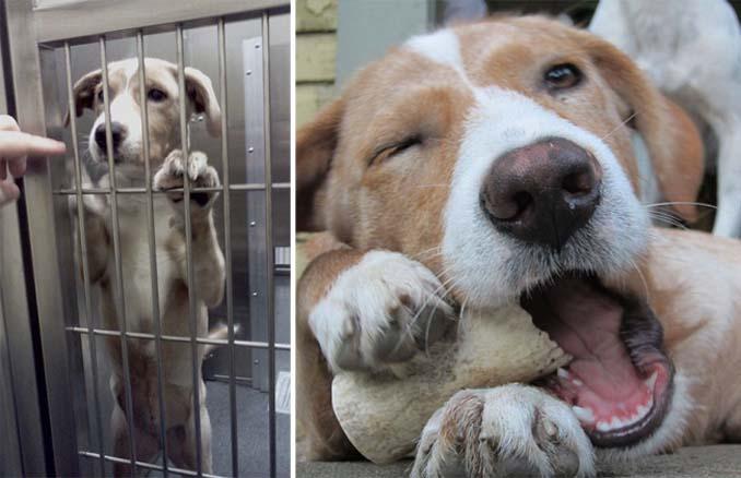 16 φωτογραφίες ζώων πριν και μετά την διάσωση που θα σας φτιάξουν την μέρα (4)