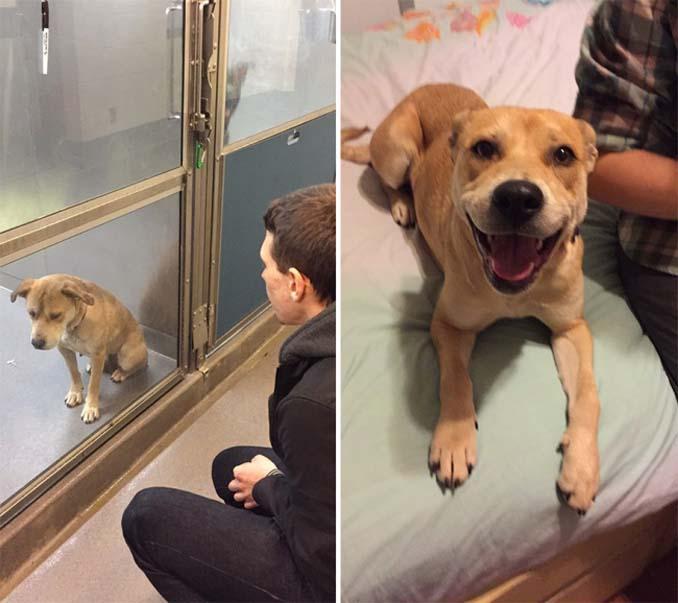 16 φωτογραφίες ζώων πριν και μετά την διάσωση που θα σας φτιάξουν την μέρα (5)