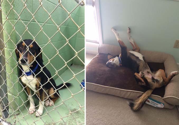 16 φωτογραφίες ζώων πριν και μετά την διάσωση που θα σας φτιάξουν την μέρα (8)